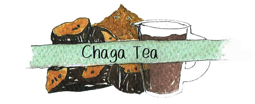 Chaga Tea Recipes & Benefits