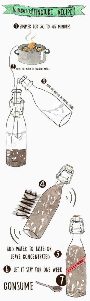Chaga101 Tincture Recipe