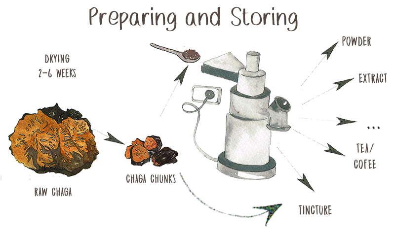 Preparing and Storing Chaga