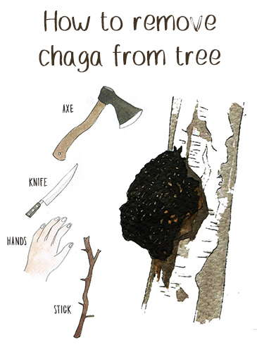 How To remove chaga