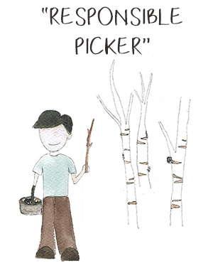 Responsible Chaga Mushroom Pickers