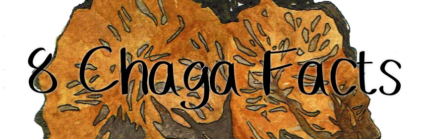 8 Chaga Facts You Should Know
