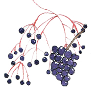 Elderberries and wildberries are strong antioxidants