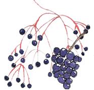 Elderberries and wildberries are strong antioxidants