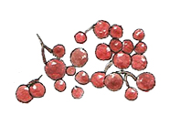 Cranberries possess extremely high amount of antioxidants
