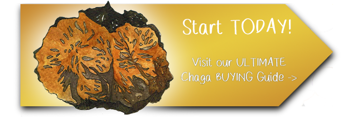 Chaga Buying Guide