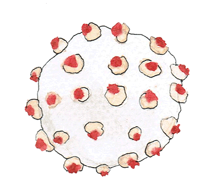 Drawn Coronavirus
